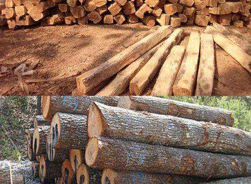 Simchi Teak Wood